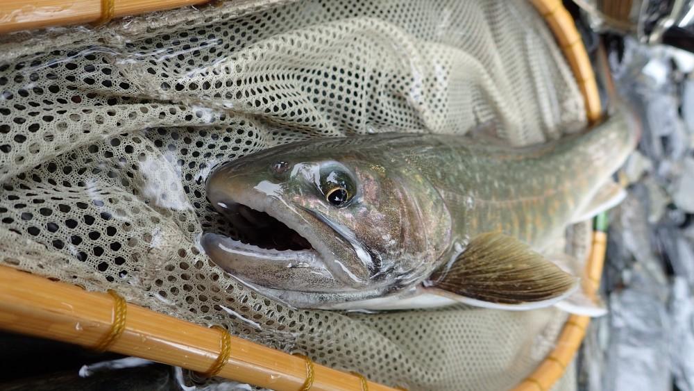 Fishing-ec